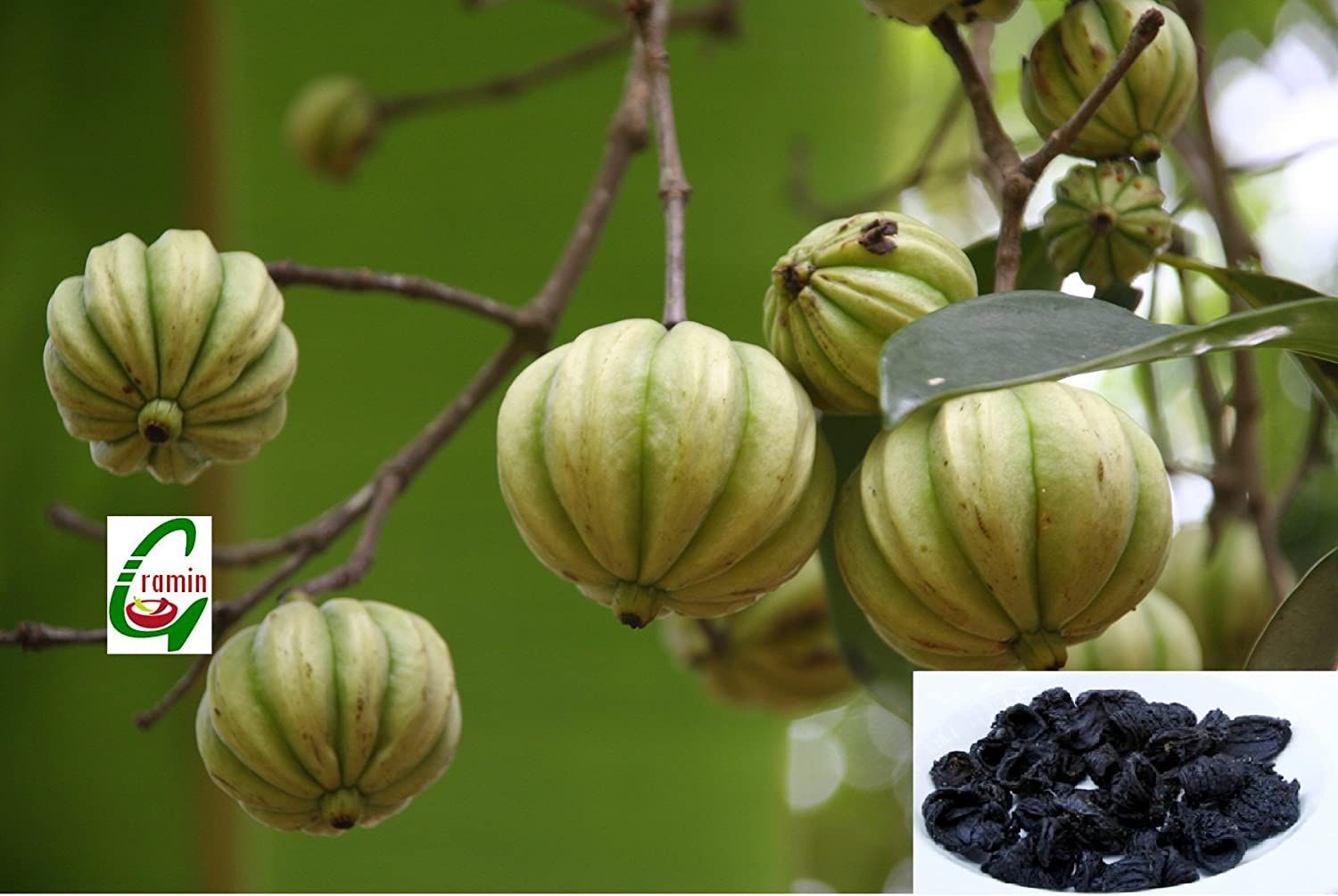 Seed Stores 10 Seeds Of Garcinia Cambogia Or Gummi Gutta Tree For Growing Amazon In Garden Outdoors
