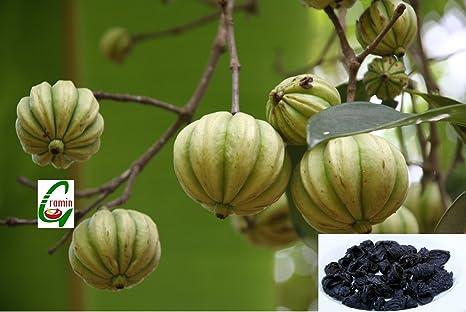 where does garcinia cambogia fruit grow