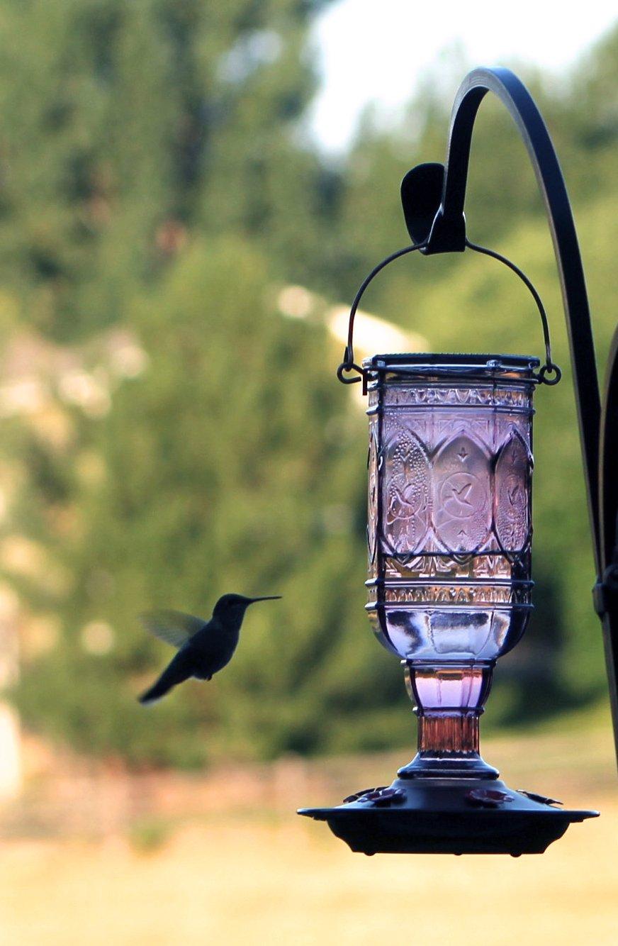 More Birds Hummingbird Feeder, Glass Hummingbird Feeders, 5 Feeding Stations, Amethyst, 20-Ounce Nectar Capacity, Jewel Antique Glass Bottle