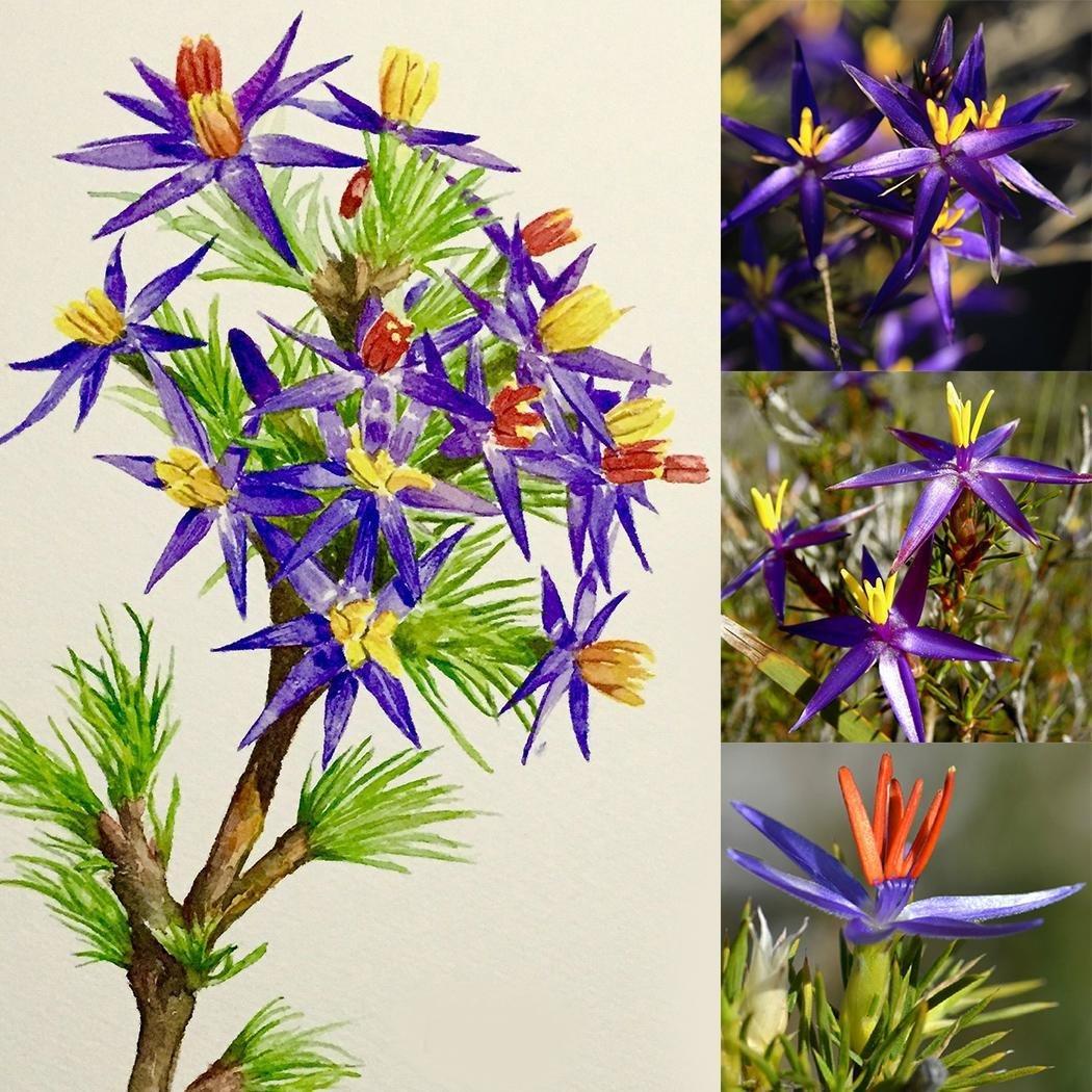 Lonlier 10/20/50 Pcs Bleu Tinsel Lily Bonsaï Graine Arbre Fleur Plantes Décor Maison Jardin