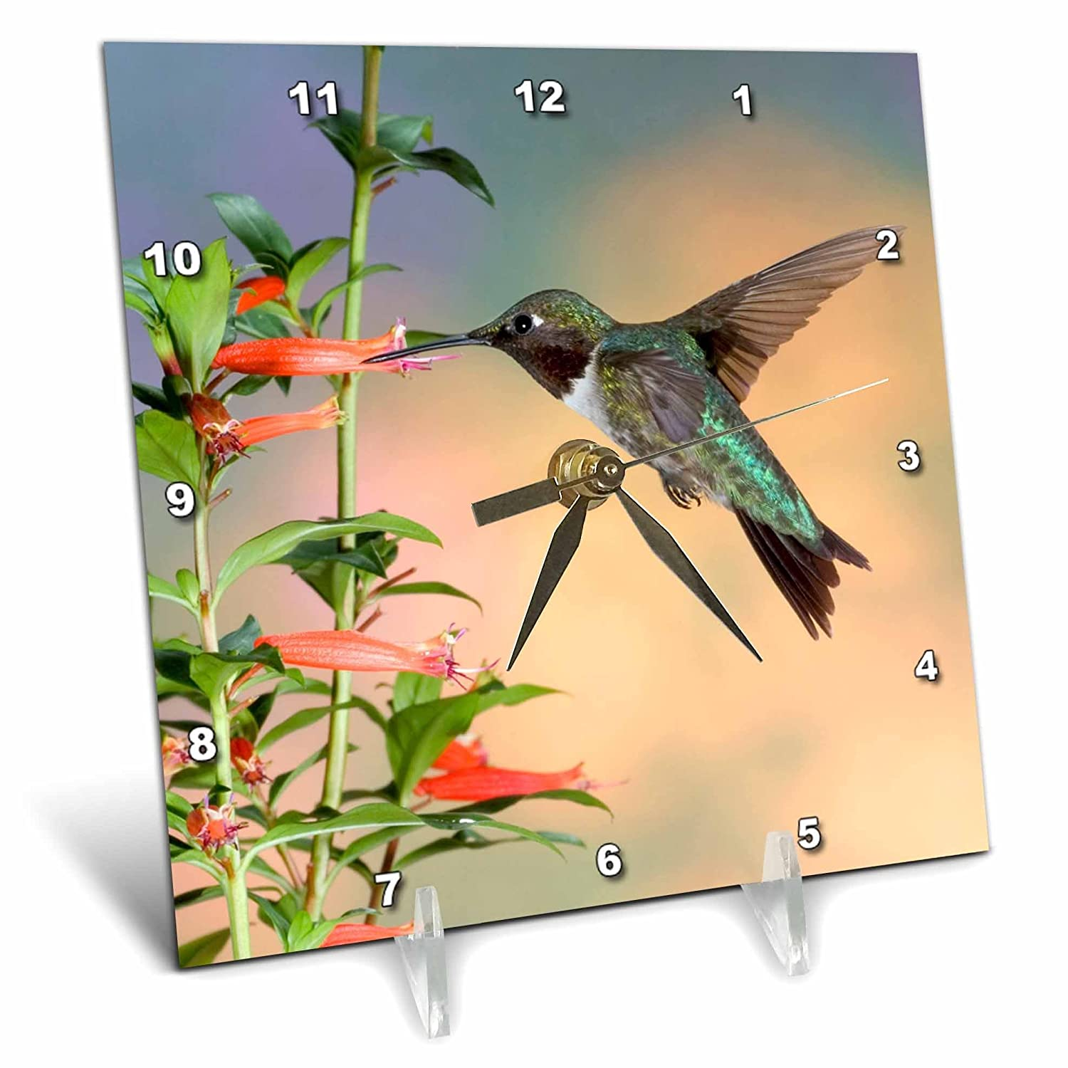 6 by 6-Inch Desk Clock dc/_205523/_1 Il 3dRose Ruby-Throated Hummingbird Male on Cigar Plant Marion Co