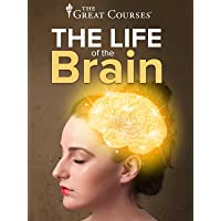 Life of the Brain