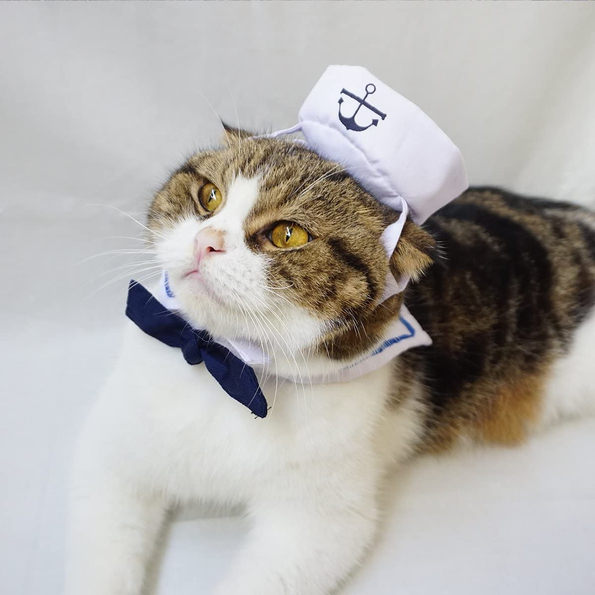 A cat wearing a sailor costume