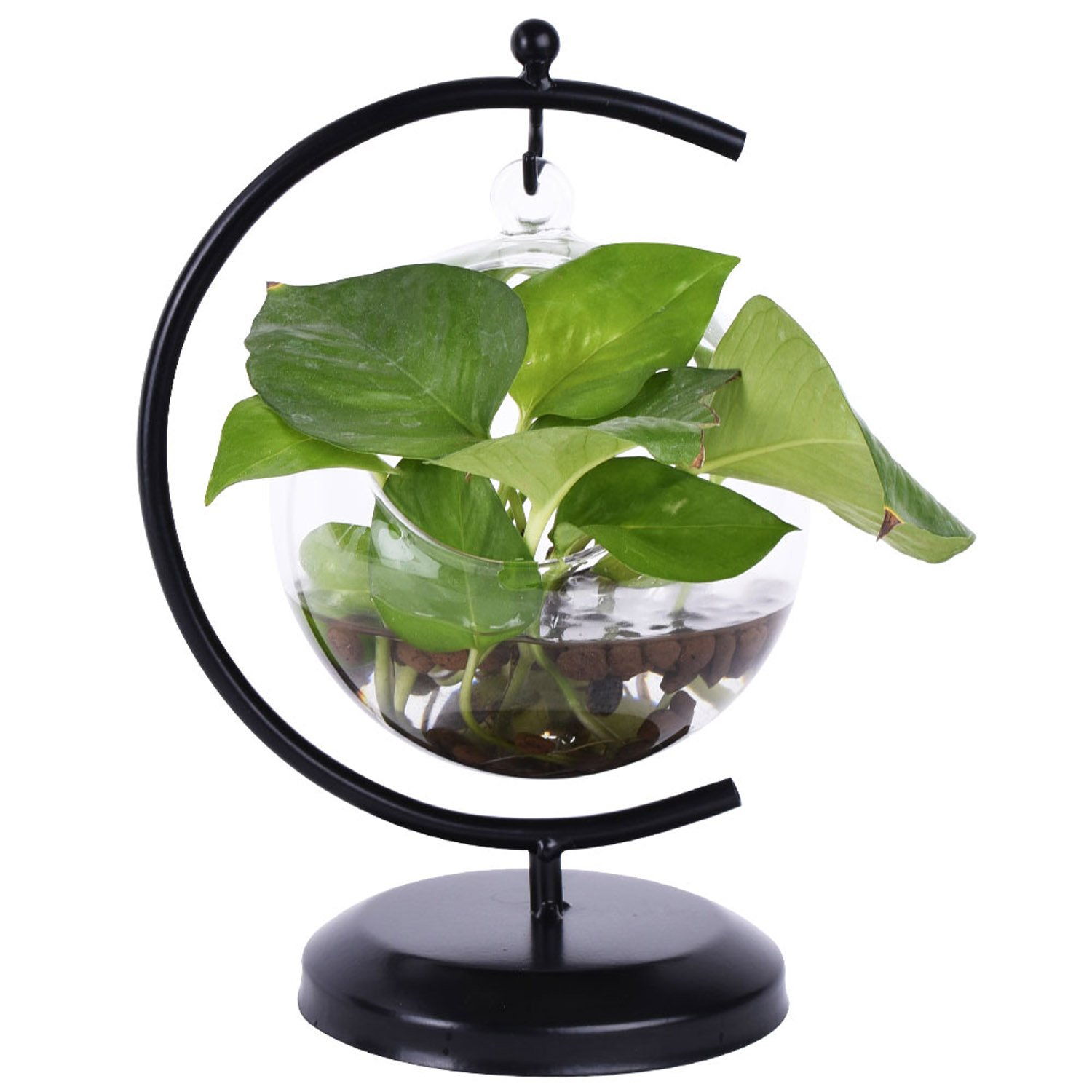 AUTOARK Glass Vase Plant Terrarium with Black Metal Stand,Office Desktop Potted Stand,Home & Office Decor Accent,1 Globe,APT-001 by AUTOARK
