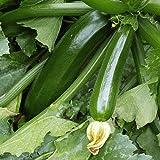 Dark Green Zucchini Summer Squash Seeds, 50+ Premium Heirloom Seeds, Fantastic Addition to Home Garden!, (Isla's Garden Seeds), Non GMO Organic, 90% Germination, 100% Pure, Highest Quality Seeds