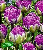 """BALDUR-Garten Tulpe""""Blue Wow"""",10 Stück"""