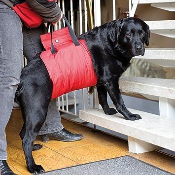 Doxtasy Asistente de arnés para Perro: Amazon.es: Productos para ...