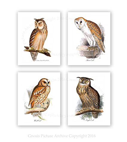 Amazon Com Owls Home Decor Set Of 4 Unframed Owl Prints Woodland