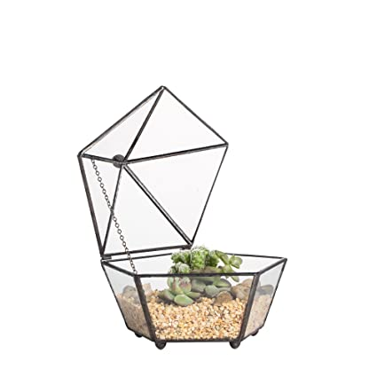 Amazon Com Ncyp Small Glass Geometric Terrarium Closed Jewel Boxed