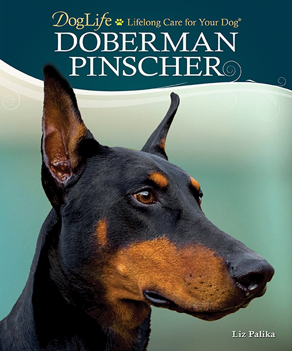 How to Care for Doberman Pincshers