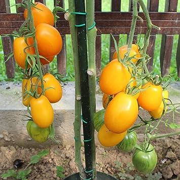 VALENCIA Tomatensamen orange Fleischtomate ertragreich saftig süß robust 10