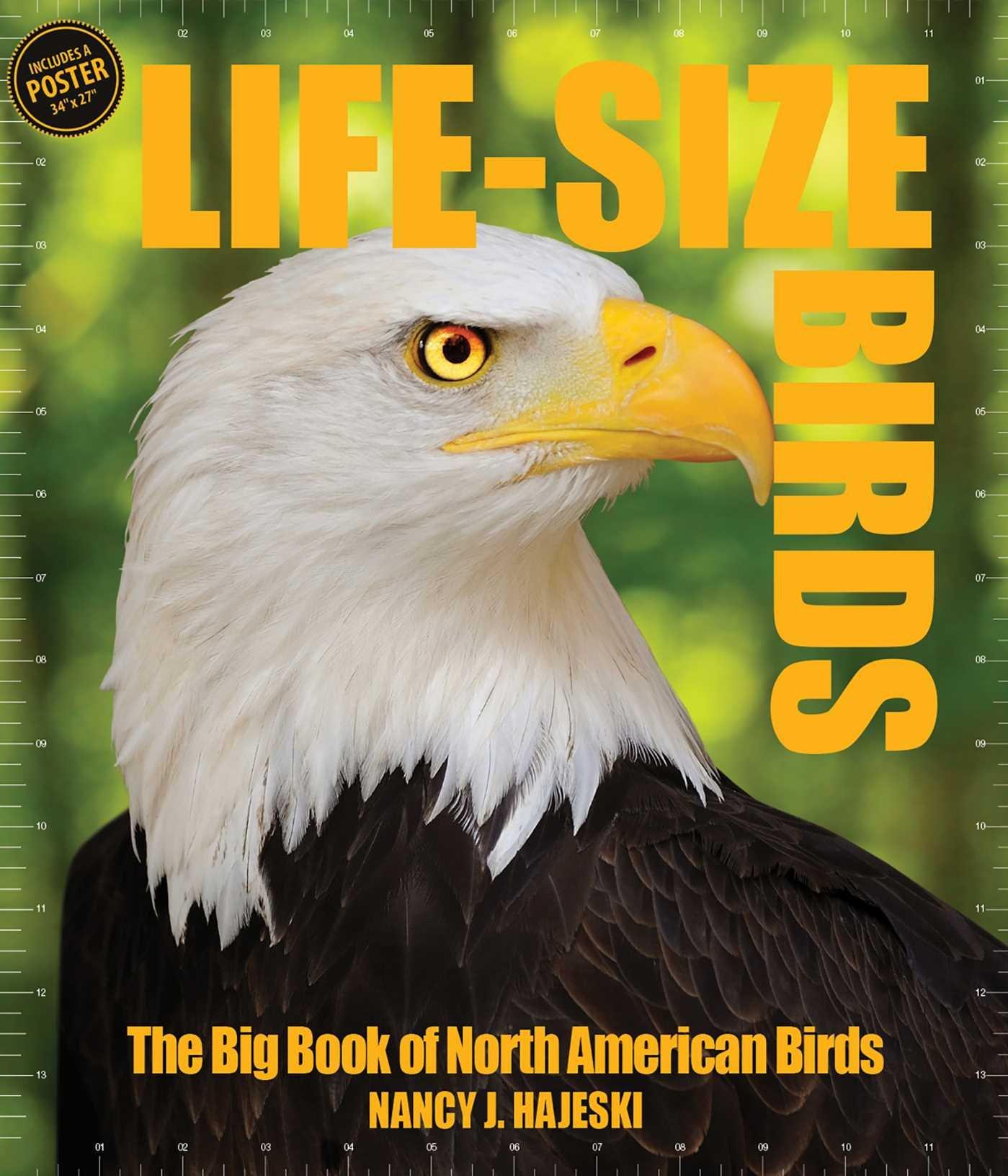 Read Online Life-Size Birds: The Big Book of North American Birds pdf