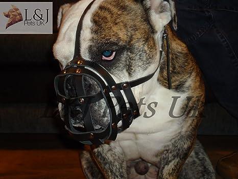 Bozal de Piel Ligera para Perro Bulldog inglés y Otros Perros con ...