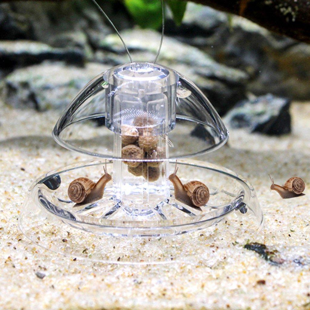 Baoblaze Gusano Colector de Caracol Acuario de Gusano Elimina Fácilmente Caracoles Deseados Todo Tipo de Pecera: Amazon.es: Deportes y aire libre