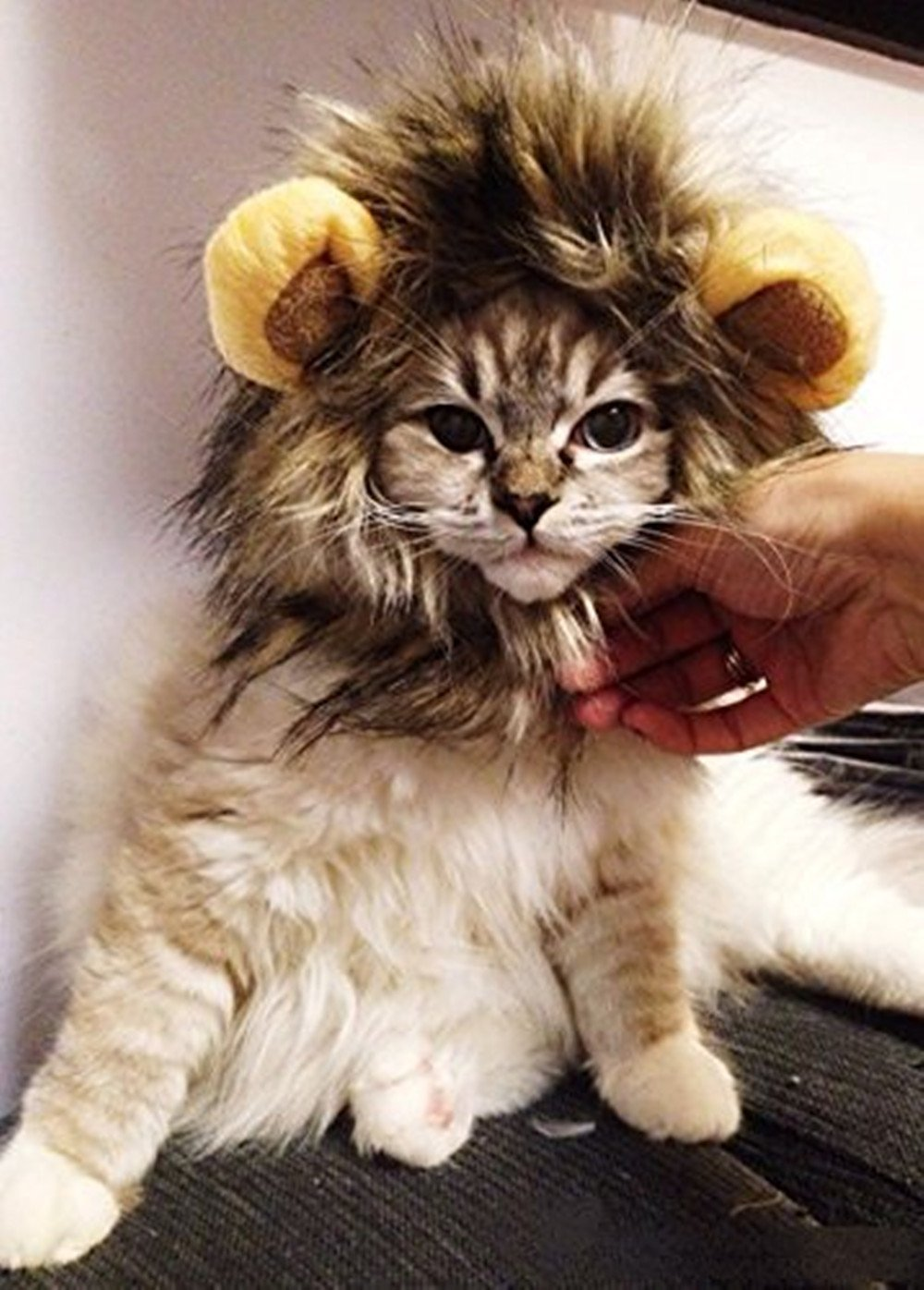 Stonges Pet Costume Lion Mane Wig per Dog Cat Halloween Dress up con orecchie