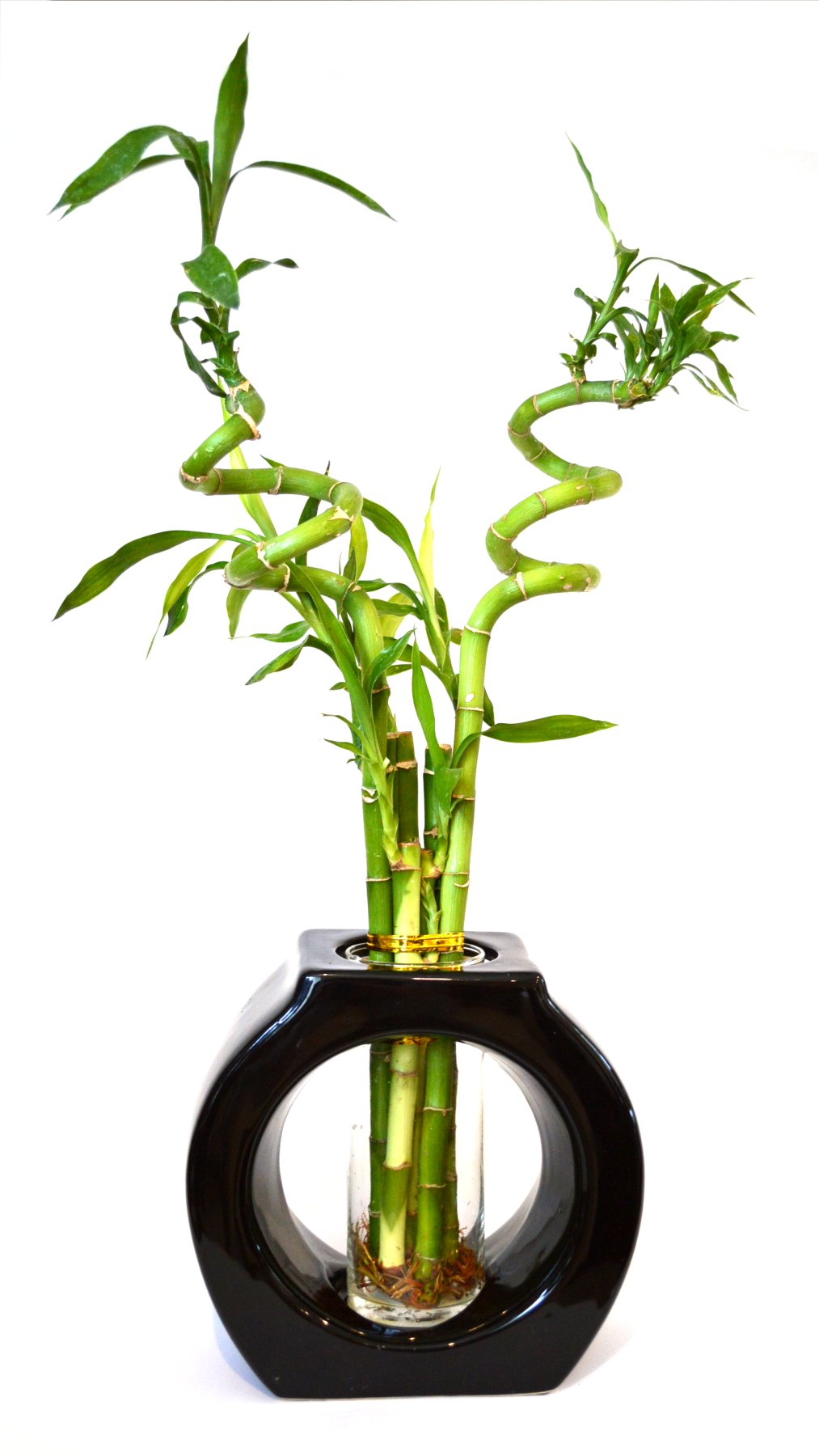 9GreenBox - Lucky Bamboo - Spiral Style 8'' Tall Hollow Ceramic Vase