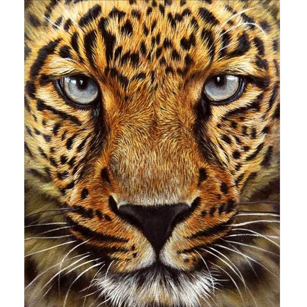5D DIY Diamond Painting Kit by Number Full Drill Round Beads Crystal Rhinestone Embroidery Cross Stitch Picture Supplies Arts Craft Wall Sticker Decor-Cheetah 12x14in MXJSUA