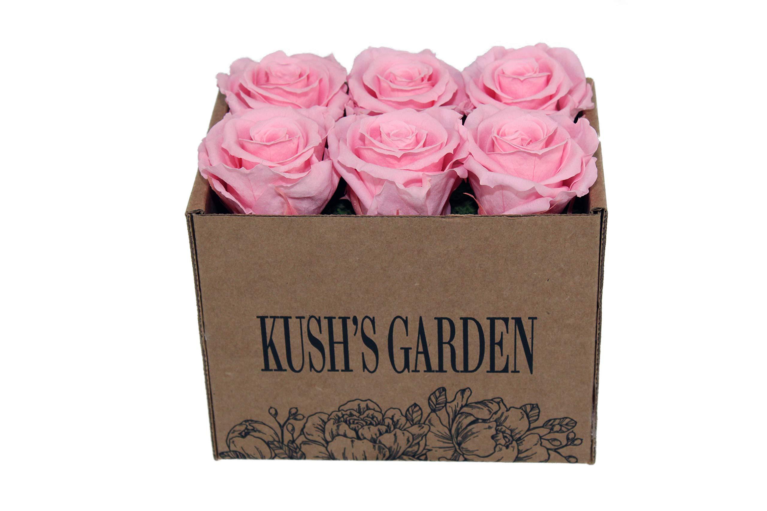 KUSHS GARDEN Real Preserved Roses in Box (Pink Princess)