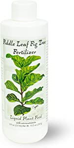 Fiddle Leaf Fig Tree Fertilizer | Ficus Plant Food | Improves Leaves and Branches | Potted Indoor Trees/House Plants Treatment by Aquatic Arts