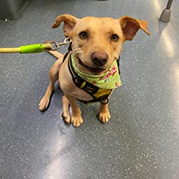 Estilo cl/ásico Pet Pooch Boutique Pa/ñuelo para Perro