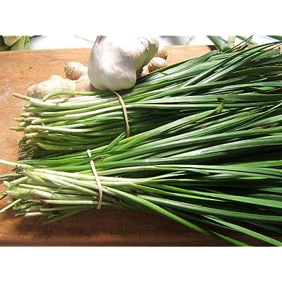 Cutdek Herb, 32 Varieties Medicinal and Spice Seeds Chives, Garlic 50 Seed : Garden & Outdoor