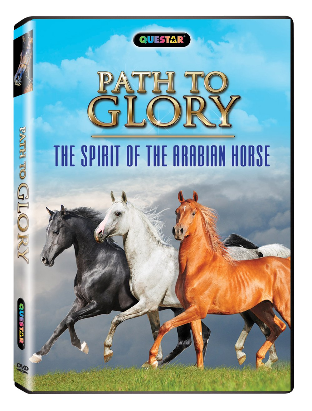 Amazon.com: Path to Glory: The Spirit of the Arabian Horse: A Film By  Horsefly Films, Sophie Pegrum, Jen Miller: Movies & TV