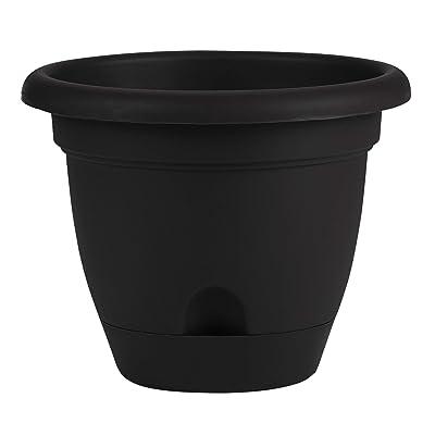 Bloem Living LP1600 Lucca Self-Watering Planter, 16-Inch, Black : Plastic Planters : Garden & Outdoor