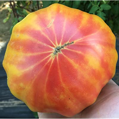 Georgia Streak Heirloom Tomato Premium Seed Packet : Garden & Outdoor