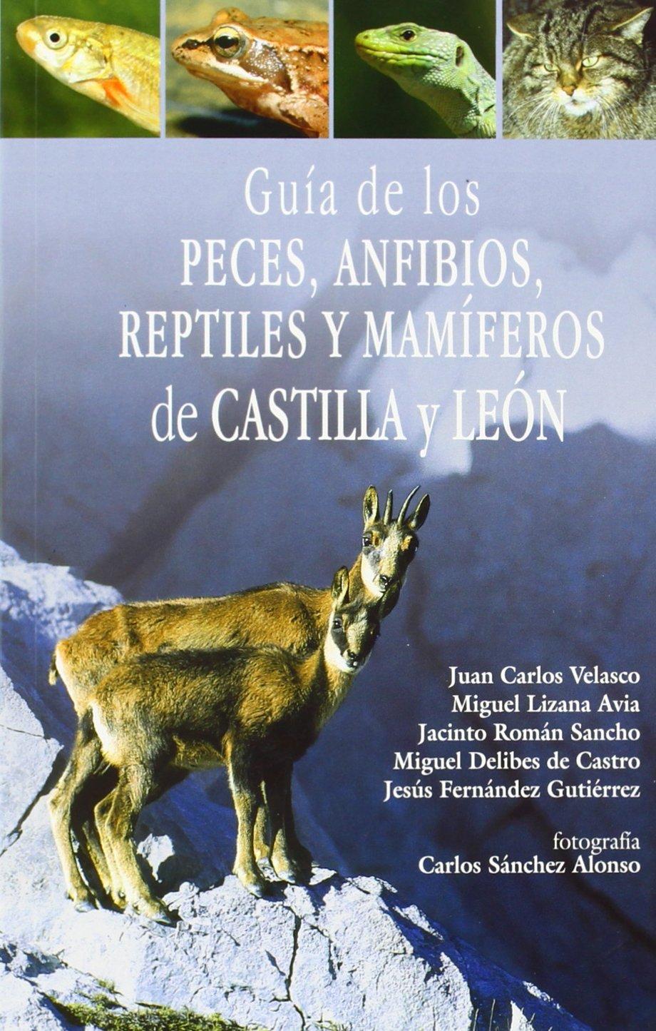 GUIA DE PECES ANFIBIOS REPTILES Y MAMIFEROS DE CASTILLA LEON: Amazon.es: VELASCO MARCOS JUAN CARLOS: Libros