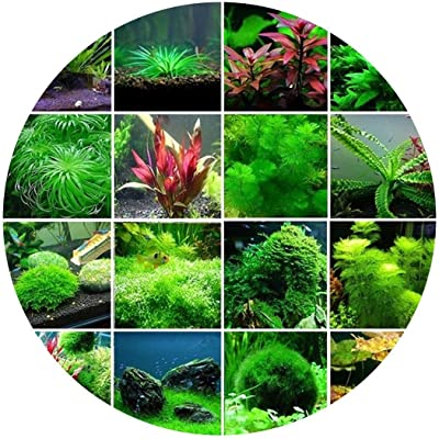 Goodfans 300 Pcs/Set Aquatic Water Seeds Aquarium Planting Seeds Fish Tank Deaoration Grass Seeds Flowers : Garden & Outdoor