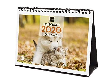 Amazon.com: Finocam – Calendario de escritorio 2020 imágenes ...