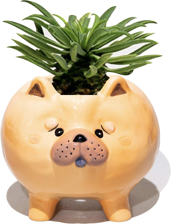 Succulent Pots with Drainage - Small Succulent Planter Handmade Original Ceramic Plant Pot Indoor - Mini Pots for Plants Flower Cactus - Home Kitchen Desk Garden Decor (Puppy Single F (Chow Chow))