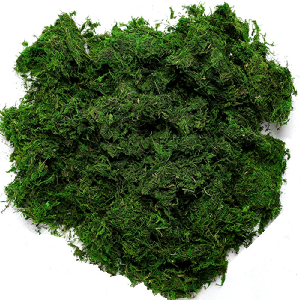 Byher 92926 Preserved Forest Moss, Fresh Green (16OZ)