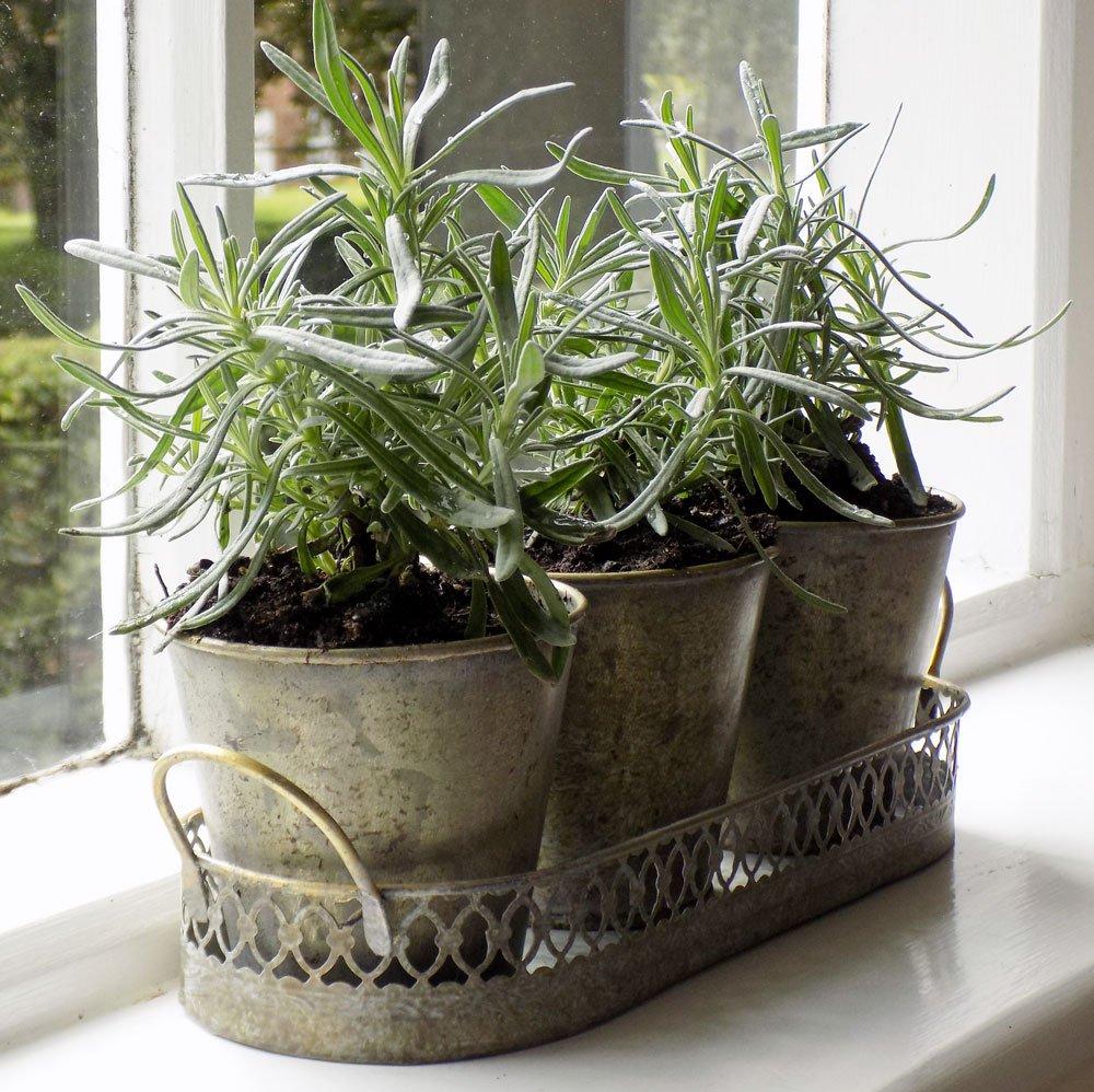 Regency set 3 herb plant pots Bowley & Jackson