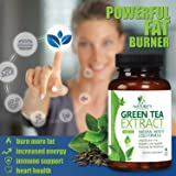 Green Tea Extract 98% with EGCG for Weight Loss
