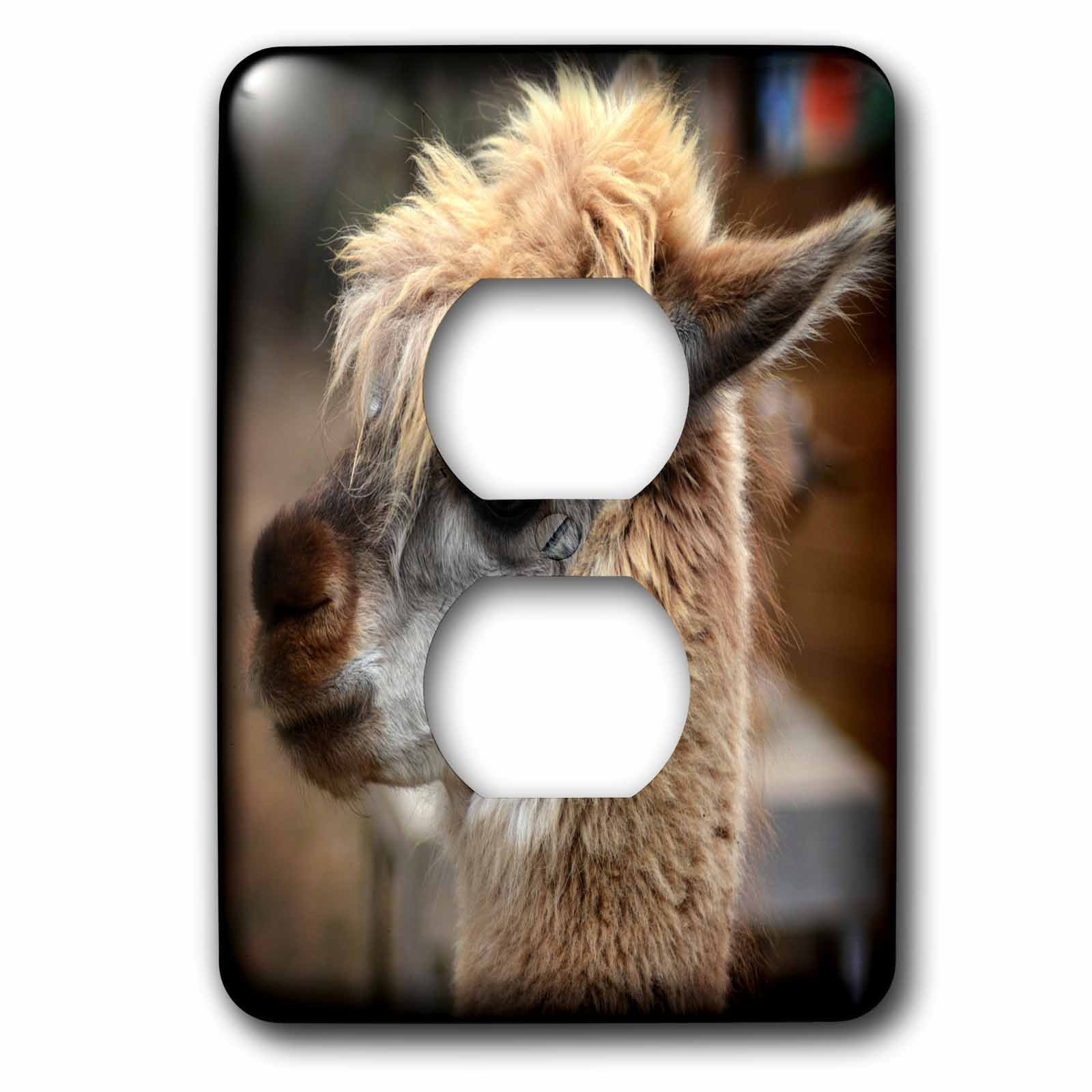 3dRose WhiteOaks Photography and Artwork - Lamas - Seriously the Face is a photo of a lama that is looking serious - Light Switch Covers - 2 plug outlet cover (lsp_265348_6)
