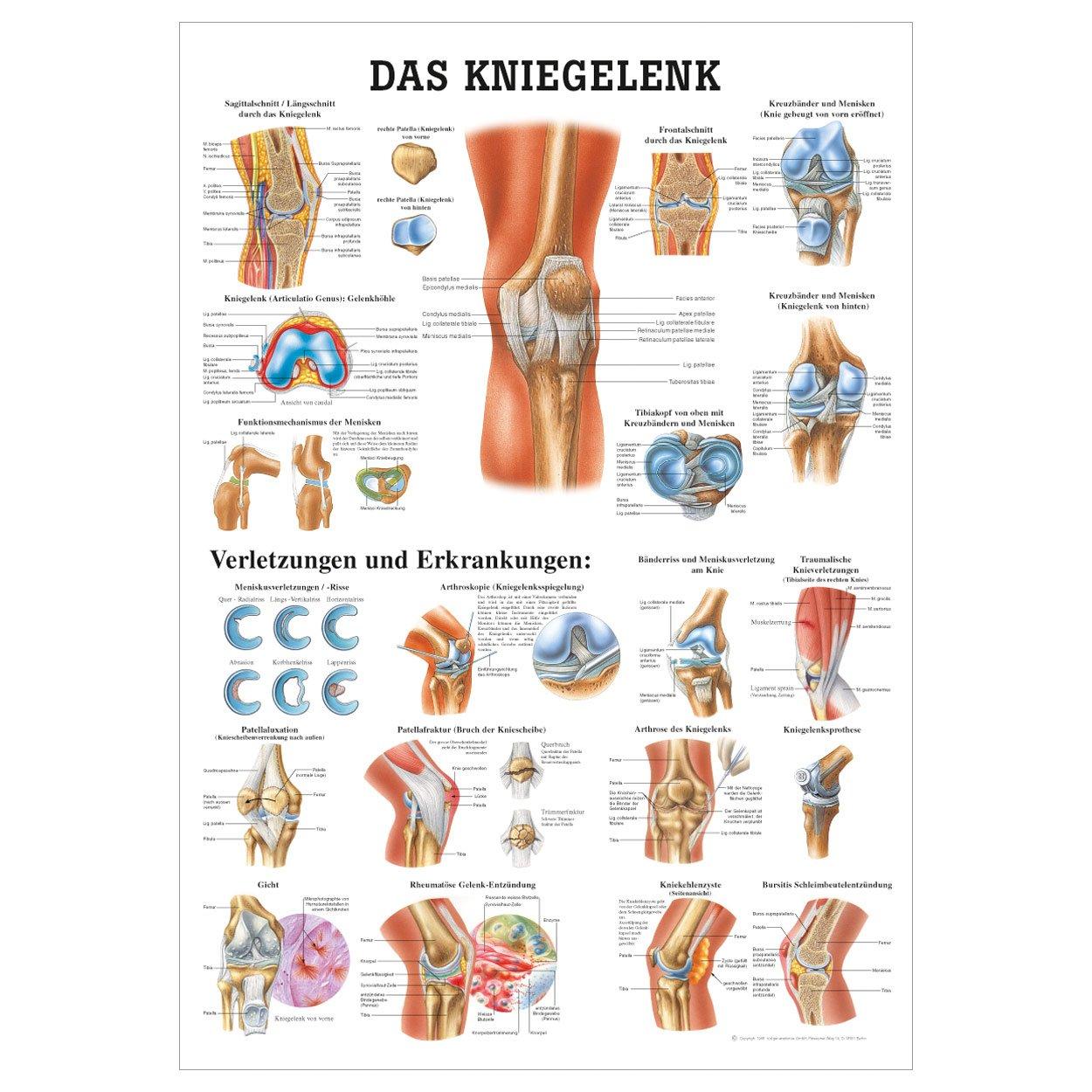 Tolle Knie Muskelanatomie Zeitgenössisch - Physiologie Von ...