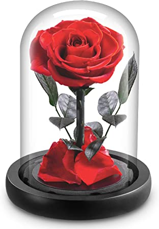 Yeplins Beauty And The Beast Rose Kit Forever Rose In The Glass Romantic Birthday Gifts For Girlfriend Amazon Co Uk Kitchen Home