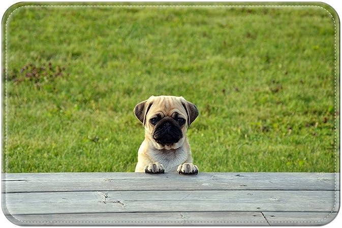 violetpos Felpudo Carlino Perros Cachorros felpudos Mat para interior y exterior, 40 x 60 cm: Amazon.es: Hogar