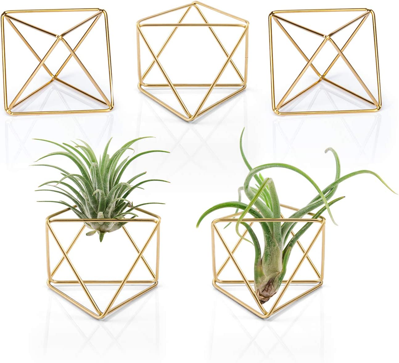 Mkono 5 Packs Air Plant Holder Modern Geometric Planter Tillandsia Container Metal Airplants Display Stand Mini Tabletop Himmeli Decor with Each Side 2.6 Long for Home, Office and Wedding, Gold