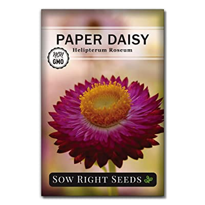 Sow Right Seeds -Paper Daisy Flower Seeds for Planting, Beautiful Flowers to Plant in Your Garden; Non-GMO Heirloom Seeds; Wonderful Gardening Gifts (1) : Garden & Outdoor