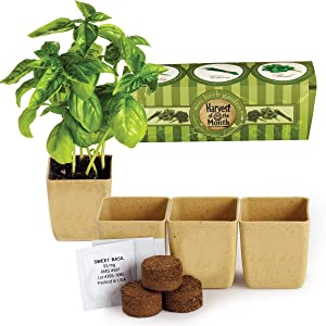 GrowPot DIY Herb Garden Kit   Grow Your Own Herbs, Chives, Basil, Parsley   Sustainable Pots