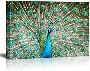 Canvas Prints Wall Art - Peacock Showing Its Beautiful Feathers/Spreading Its Tail | Modern Wall Decor/Home Decoration Stretched Gallery Canvas Wrap Giclee Print & Ready to Hang - 12