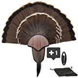New Age Taxidermy Premium Turkey Fan Mount with
