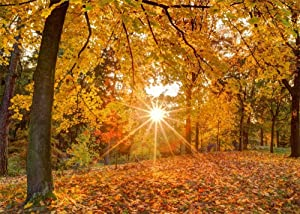 Leowefowa 5X3FT Autumn Backdrop Forest Trees Sunshine Nature Fall Backdrops for Photography Golden Falling Leaves Rural Vinyl Photo Background Kids Baby Harvest Greeting Studio Props