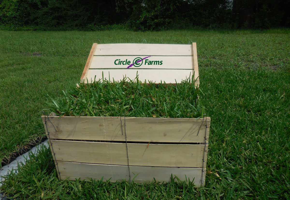 Palmetto St. Augustine Grass Plugs / Box of 72 by Circle C Farms, Inc. (Image #1)