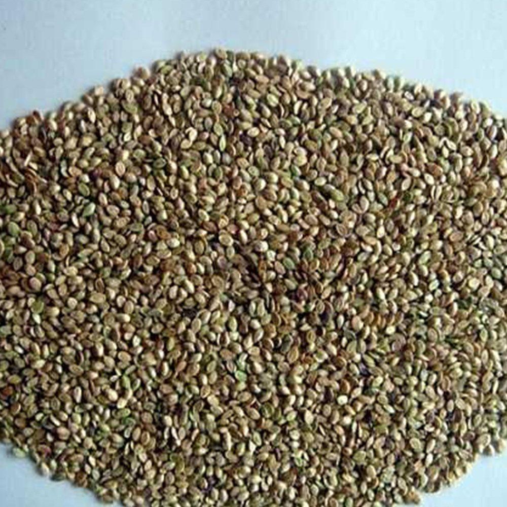 De Ree Lemon Basil Herbs Herb Vegetable Plant 225 Seeds