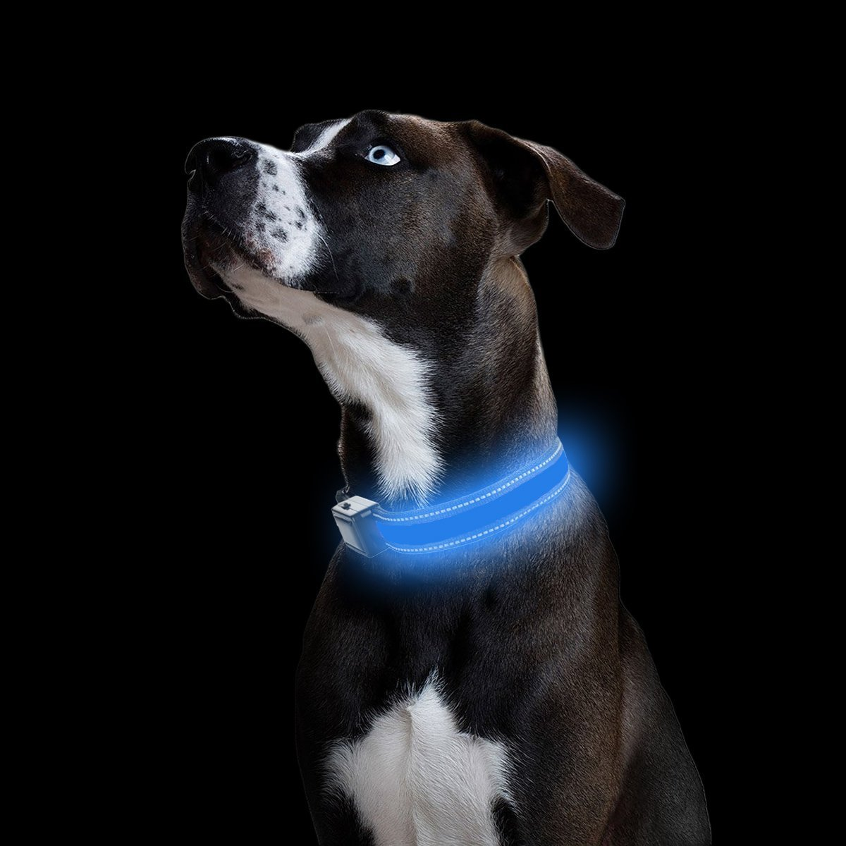 Kailian /® Safety USB Rechargeable /& Solar charger Dog Collar Reflective Flashing Lights LED Waterproof Dog Collar-Pink-S