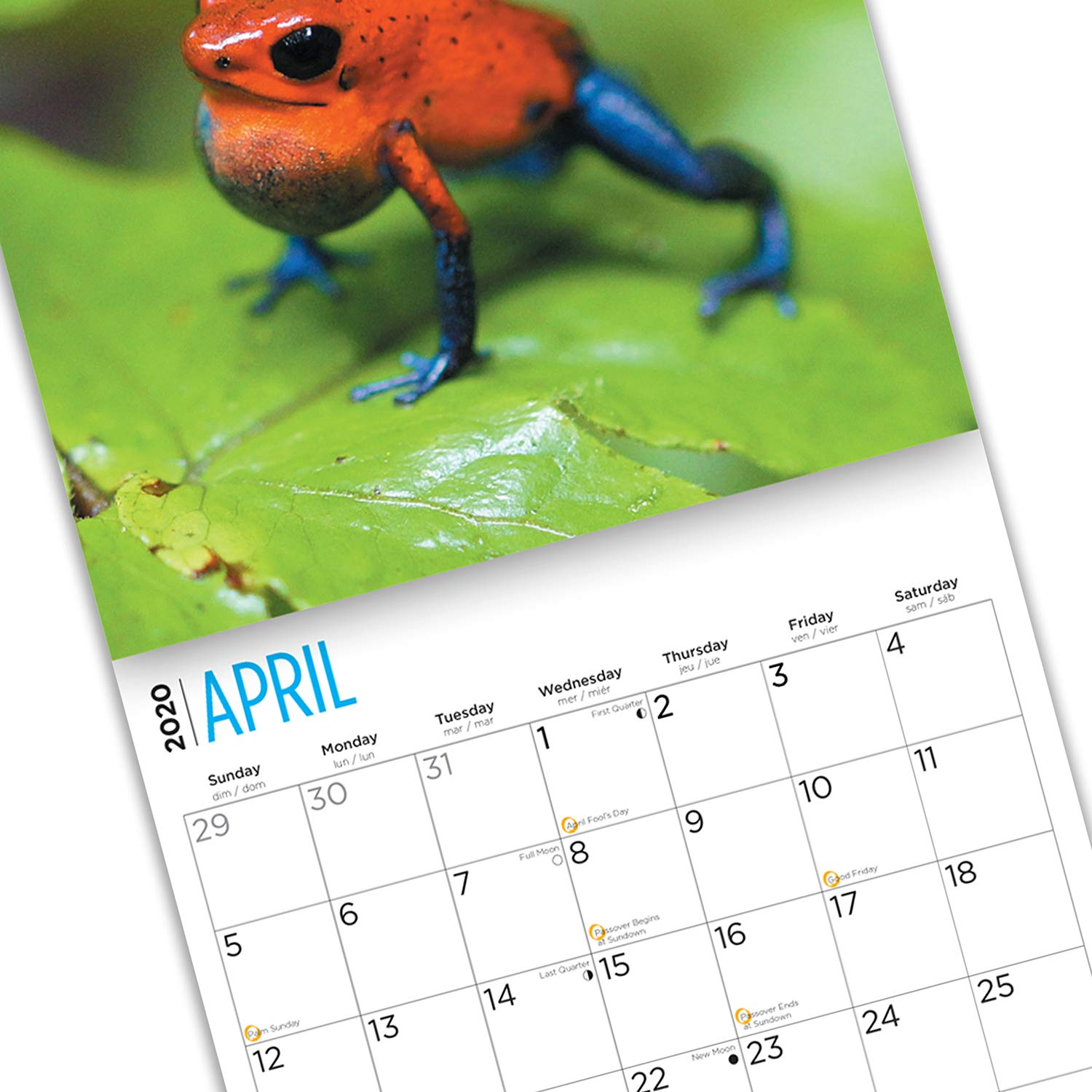 2020 Frog Wall Calendars by Bright Day Calendars 16 Month Wall Calendar 12 x 12 Inches Reptiles and Bugs Collection