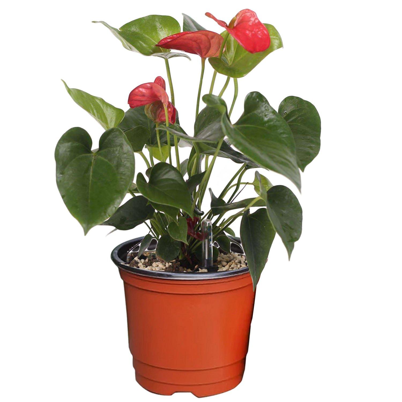 150 x 110 x 132 cm Gosear 100 Piezas Jard/ín Flor Maceta Vivero//Flor de Macetero Planta Pote de Pl/ástico Doble Color